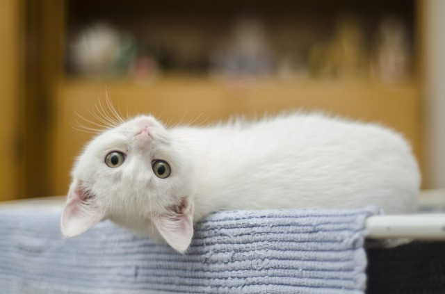 kitten-1285341_1920.jpg