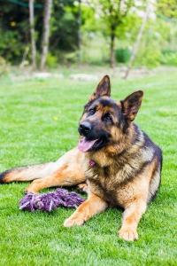 dog-2249938_1920